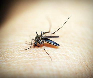 Malaria – jak się przed nią chronić?